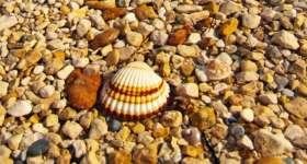povljana-beach