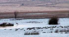 povljana-ornithology-reserve